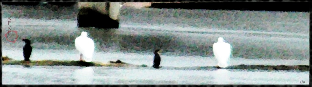Cormorants and Pelicans